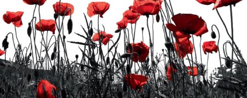 flores_nature-banner